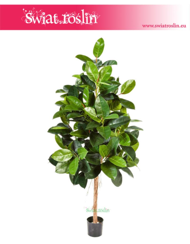Fikus, Ficus Elastica, Figowiec Elastica, Sztuczny Fikus Elastica, rośliny doniczkowe sklep internetowy, wysyłka