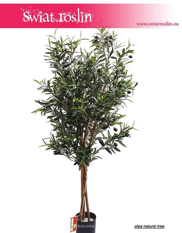 Oliwka, Olea Natural, Oliwka sztuczna, sztuczne drzewko oliwkowe, szuczne rosliny doniczkowe, do pokoju, do firmy, do mieszkania