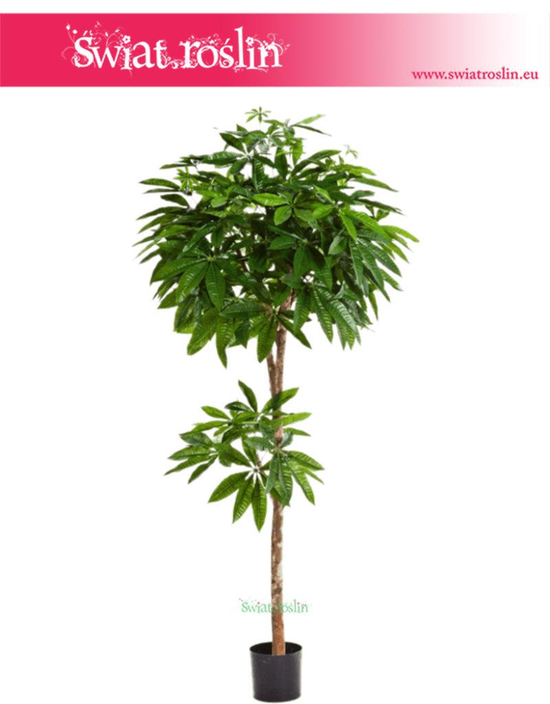Pachira - roślina sztuczna