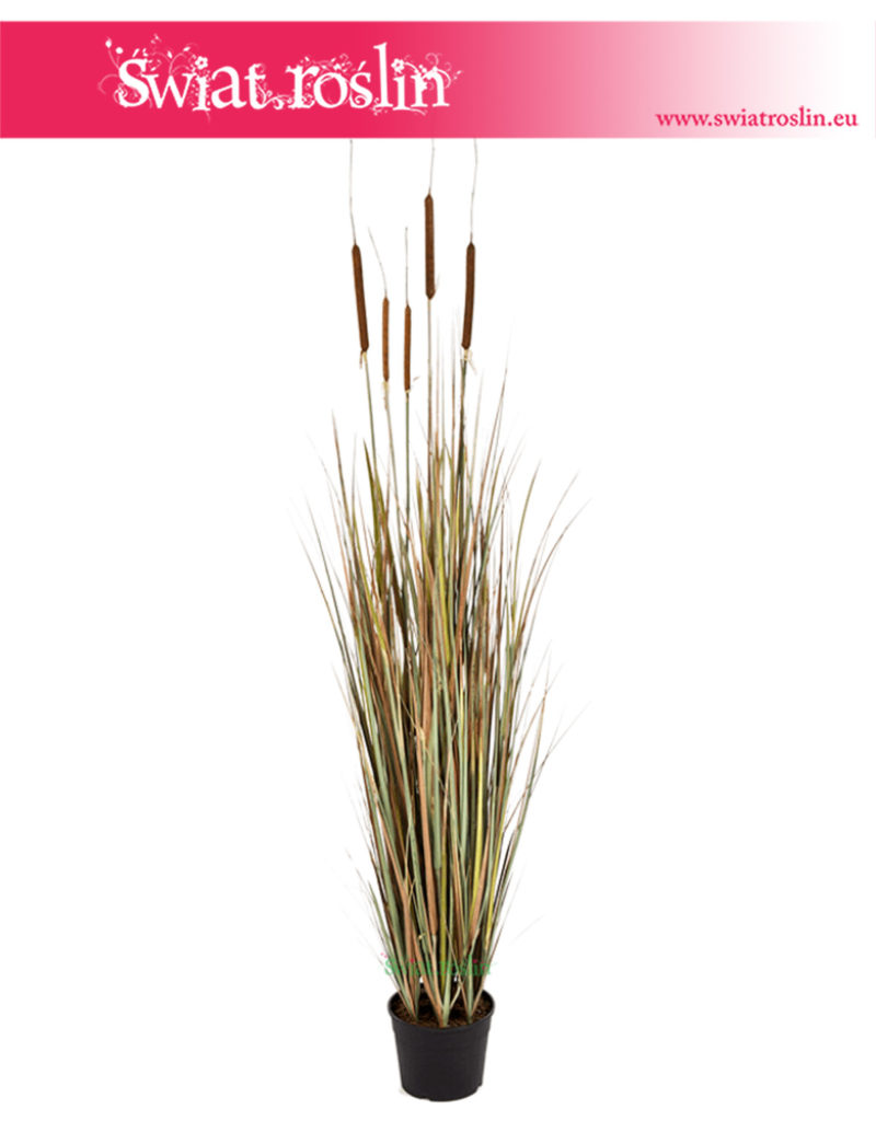 Sztuczna trawa, Cattail Grass, trawa doniczkowa