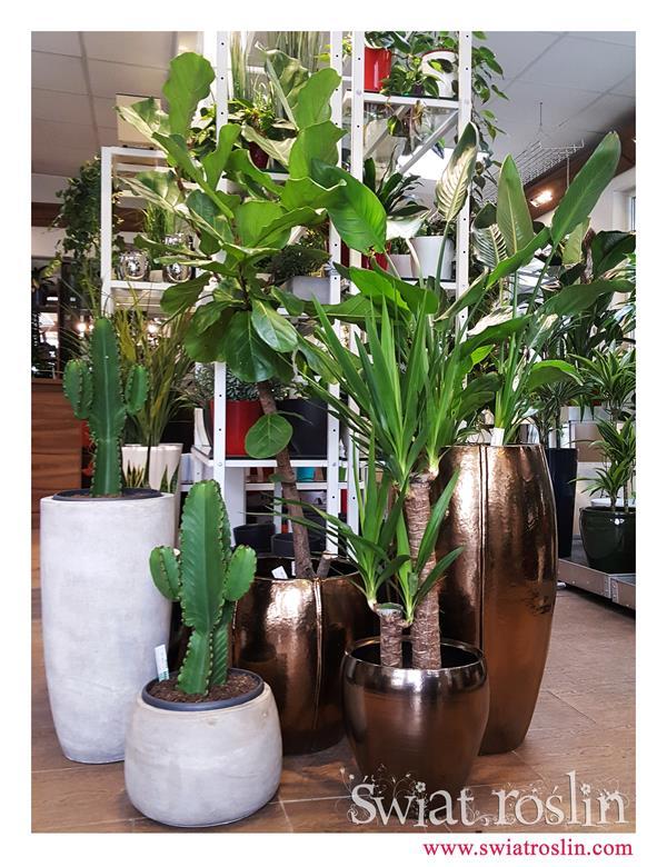 donica ceramiczna, duże rośliny Doniczkowe sklep