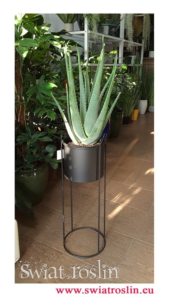Aloes, Aloes zwyczajny, Aloes Barbadensis, Aloe Vera Barbadensis, Alona Barbadoska, Aloes Vera, Aloe Vera