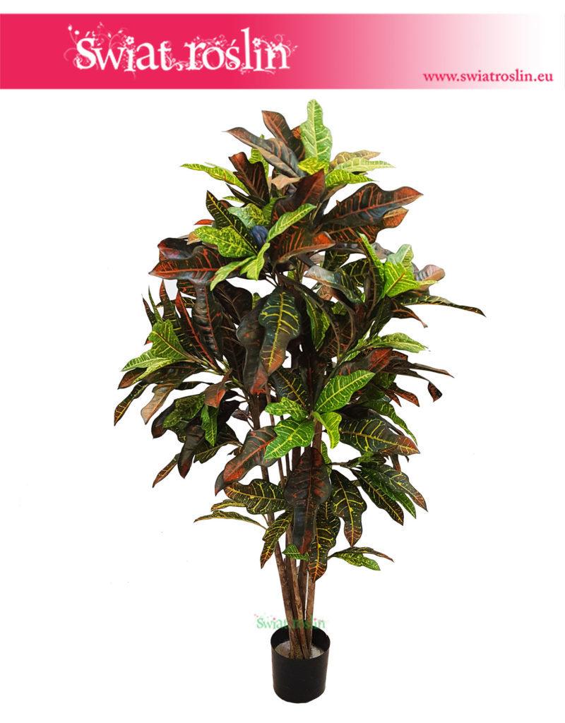 Croton Excellent, Sztuczny Kroton, Petra, Trójskrzyn, Codiaeum, Croton sztuczny 2 (1)