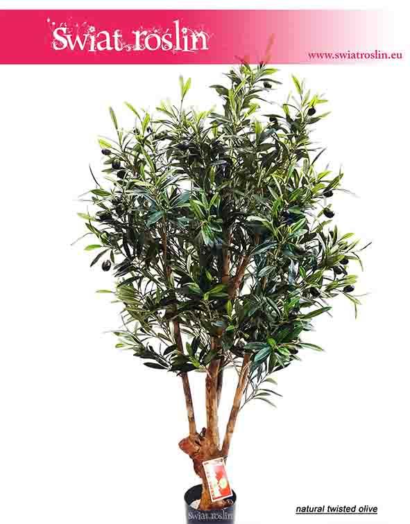 Oliwka sztuczna sztuczne dzewko, natural twisted olive 4