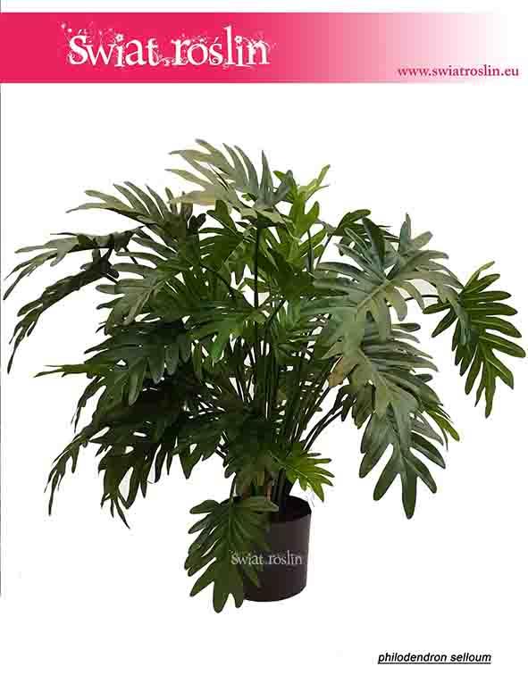 philodendron-selloum-sztuczny-filodendron-selloum-2