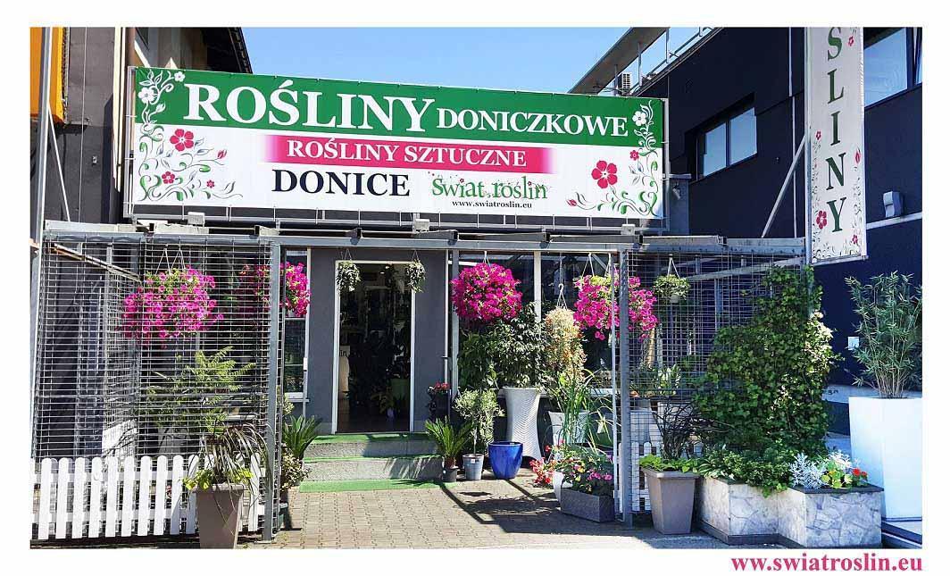 sklep świat roślin, rośliny doniczkowe, rośliny pokojowe, swiat roslin, rosliny do biura, rośliny do hotelu, kwiaty doniczkowe