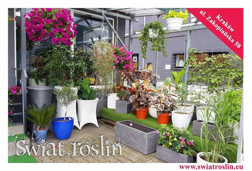 Kwiaty doniczkowe, rośliny doniczkowe, sklep internetowy, sklep Kraków