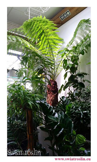 rośliny donice Kraków, rośliny sztuczne Kraków, rośliny do hotelu, rośliny na zielony parapet